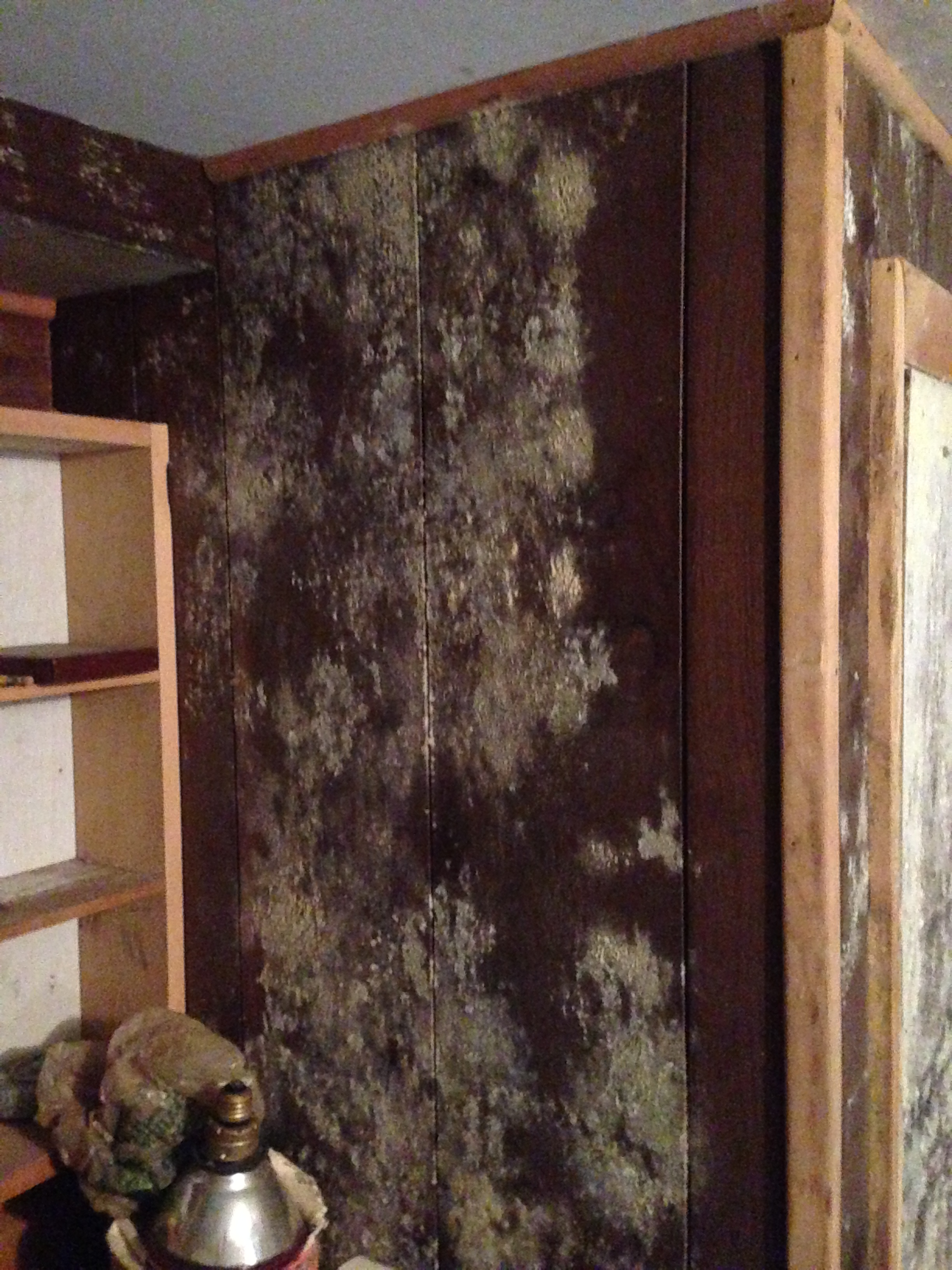 Mold remediation company NJ