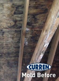 attic mold remediation