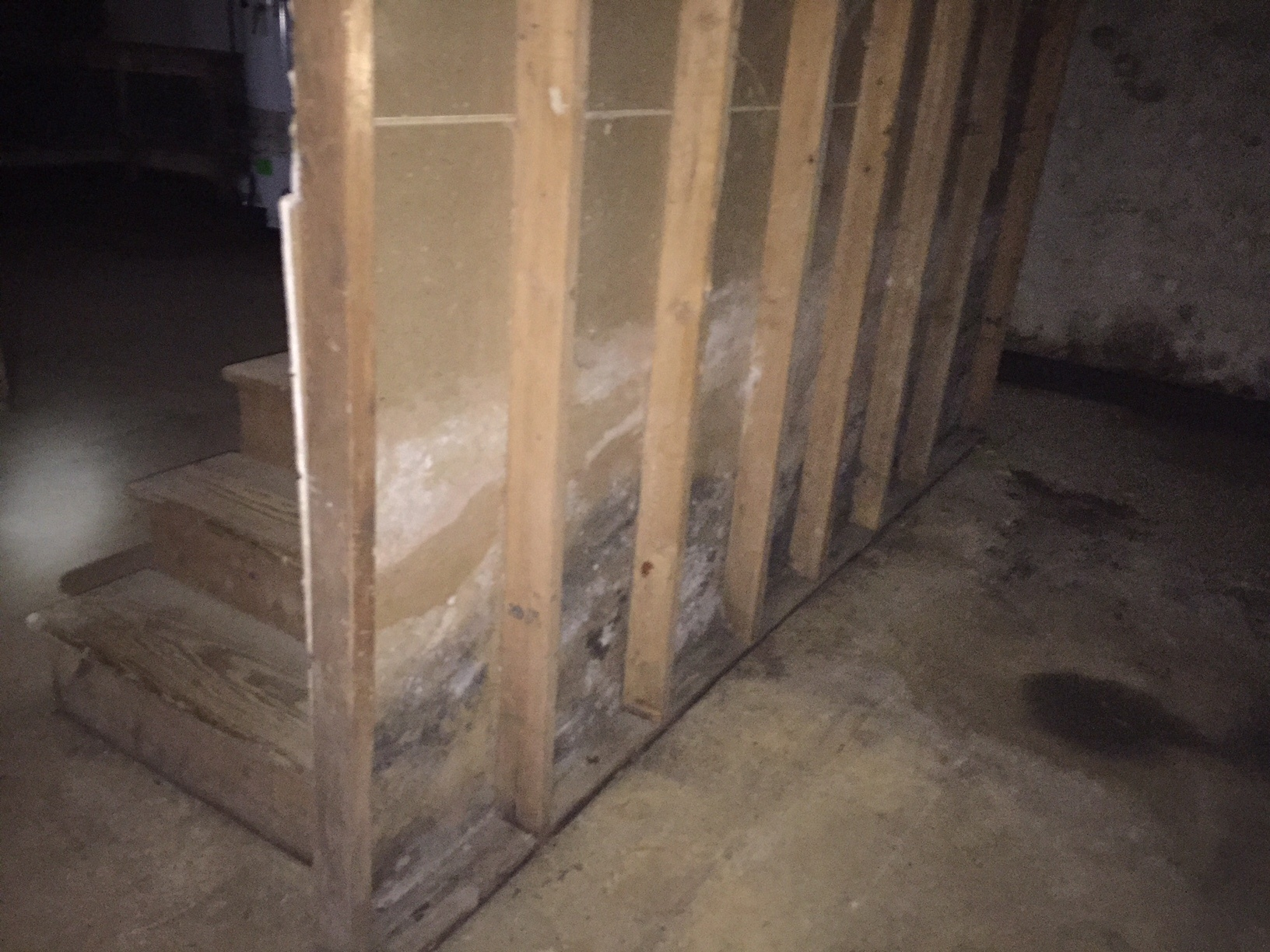 mold in basement.jpg