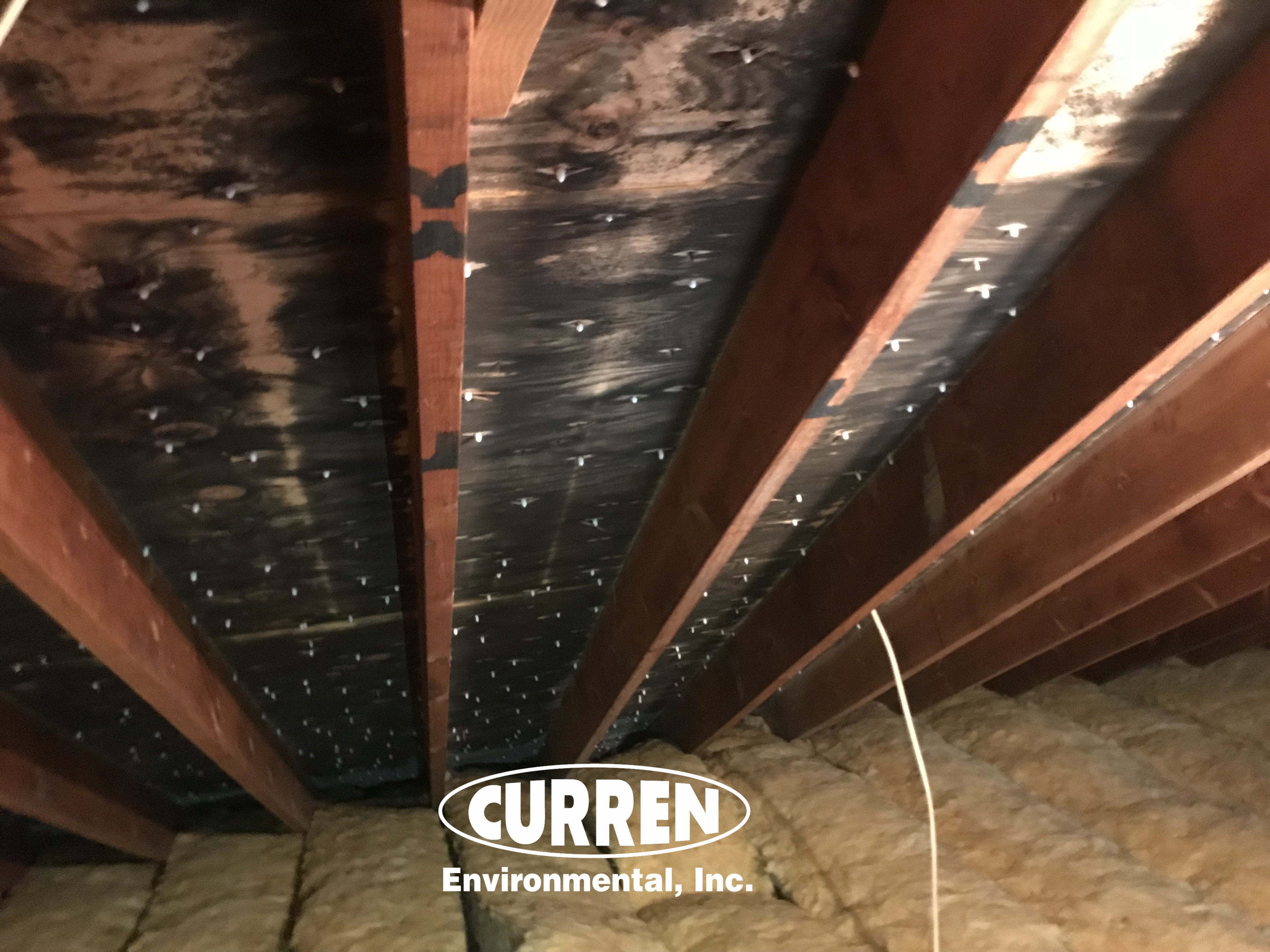 typical mold levels in an attic