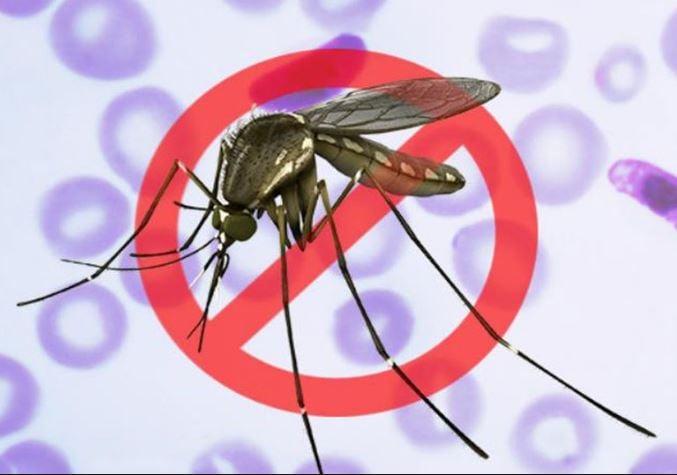 Killmosquitoes-1