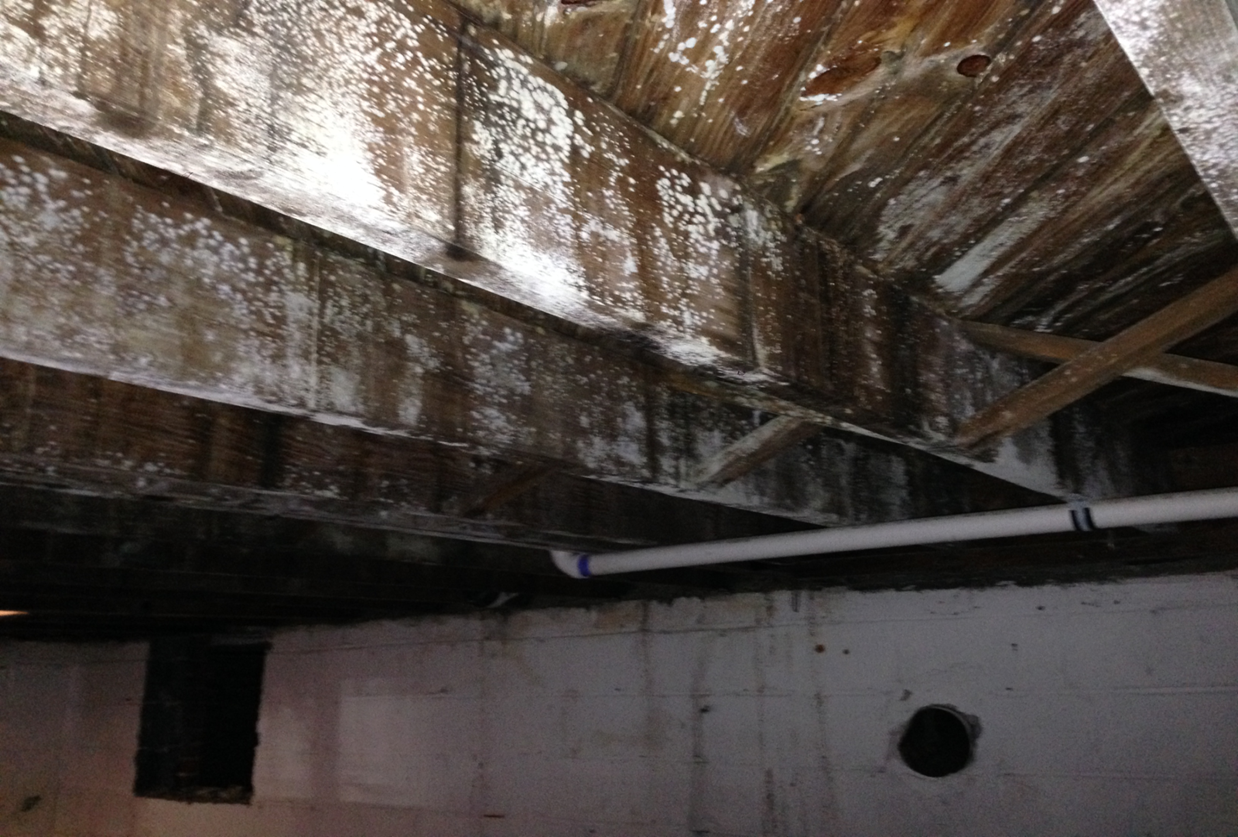 Mold is common in crawl spaces