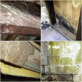 Mold Color Collage