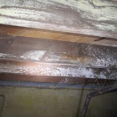 Mold Growing in Crawl Space