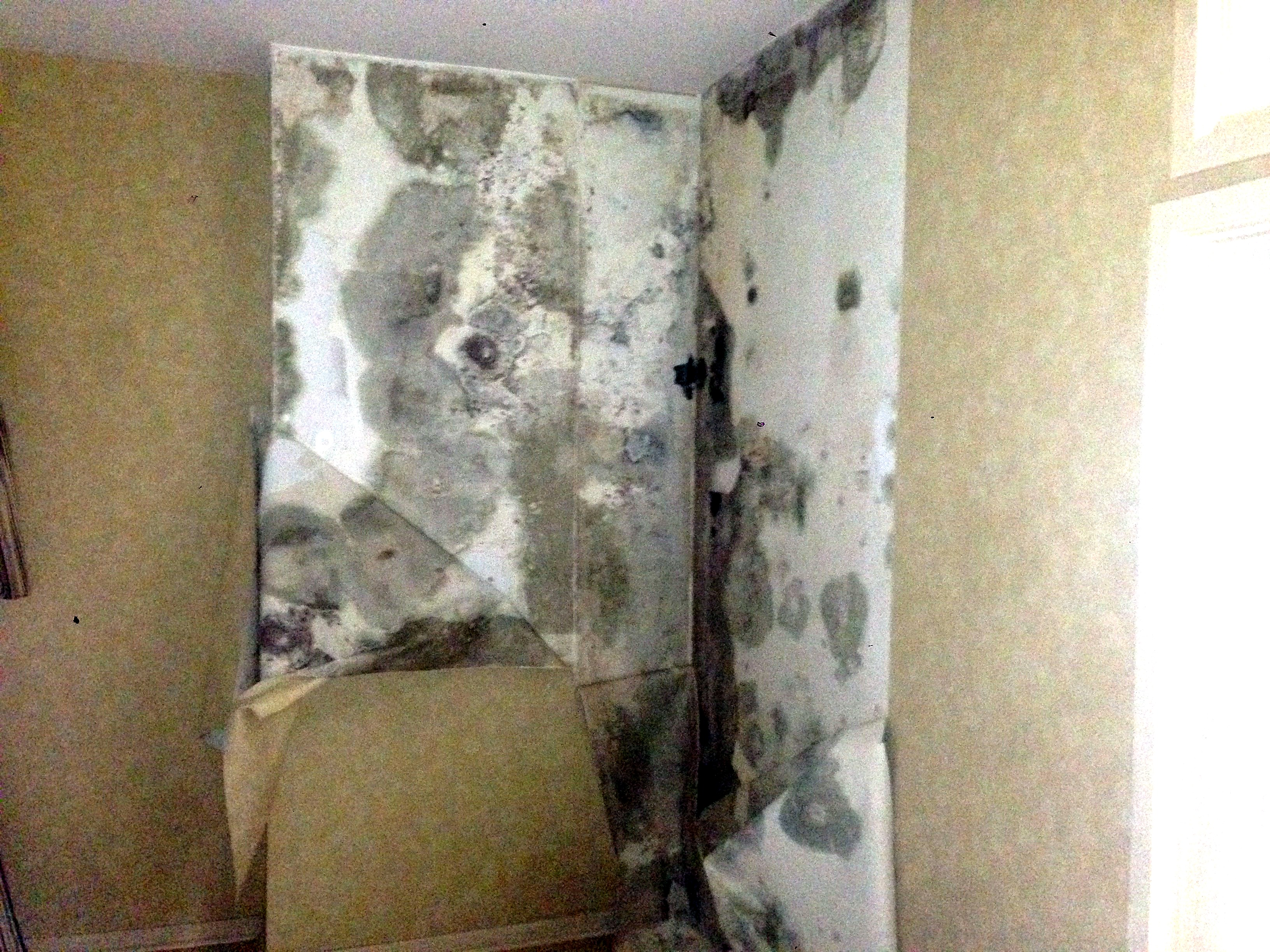 Mold behind wall paper