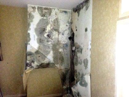 Mold behind wall paper.jpg