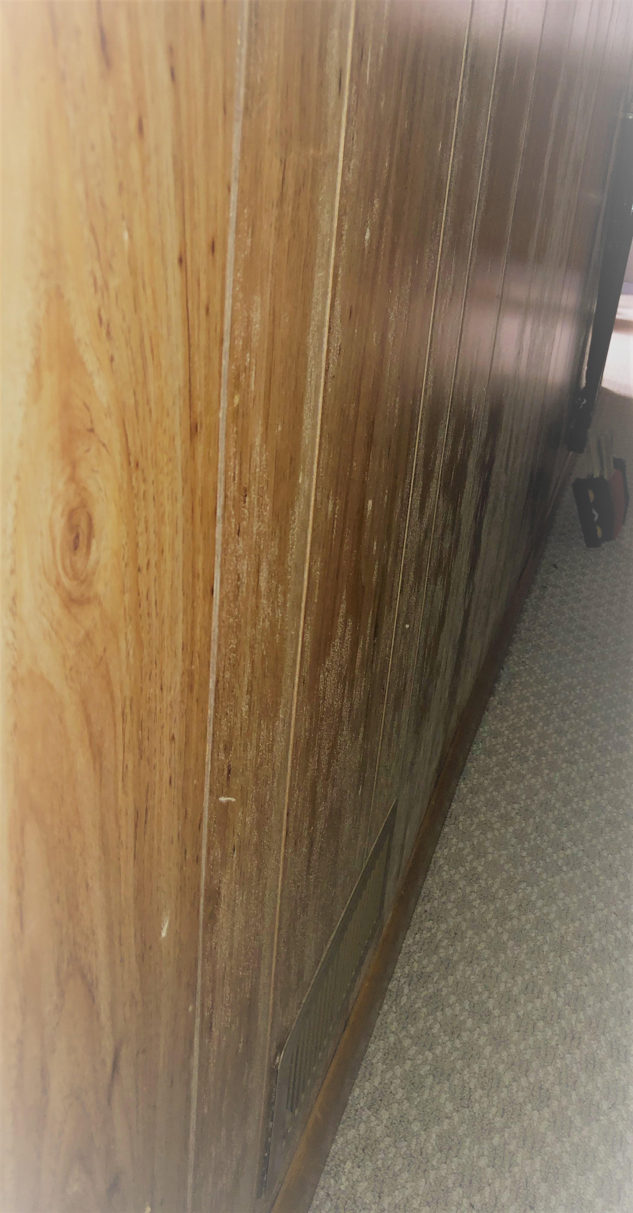 Mold growth on wood paneling