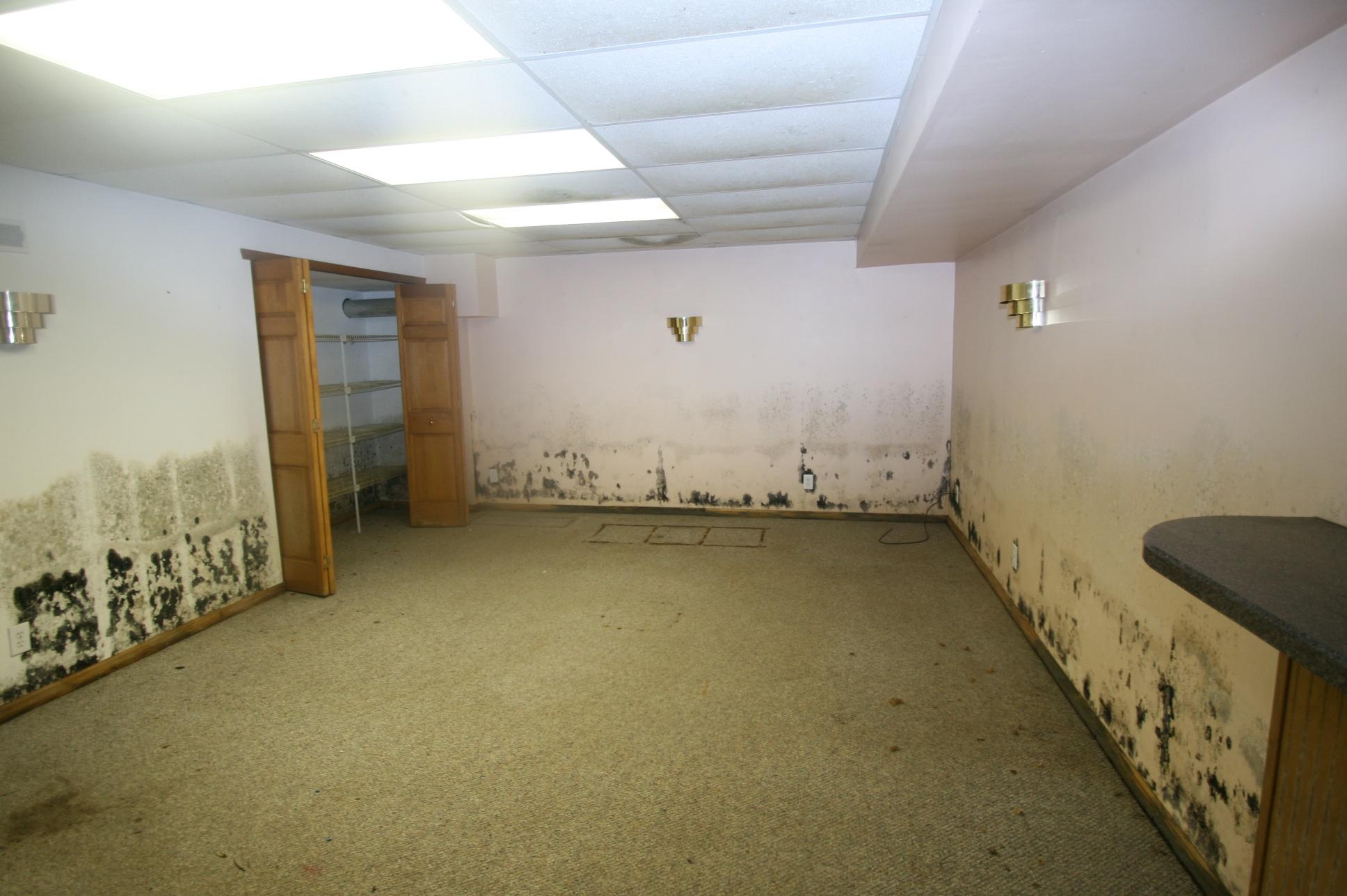 Mold in basement.jpg
