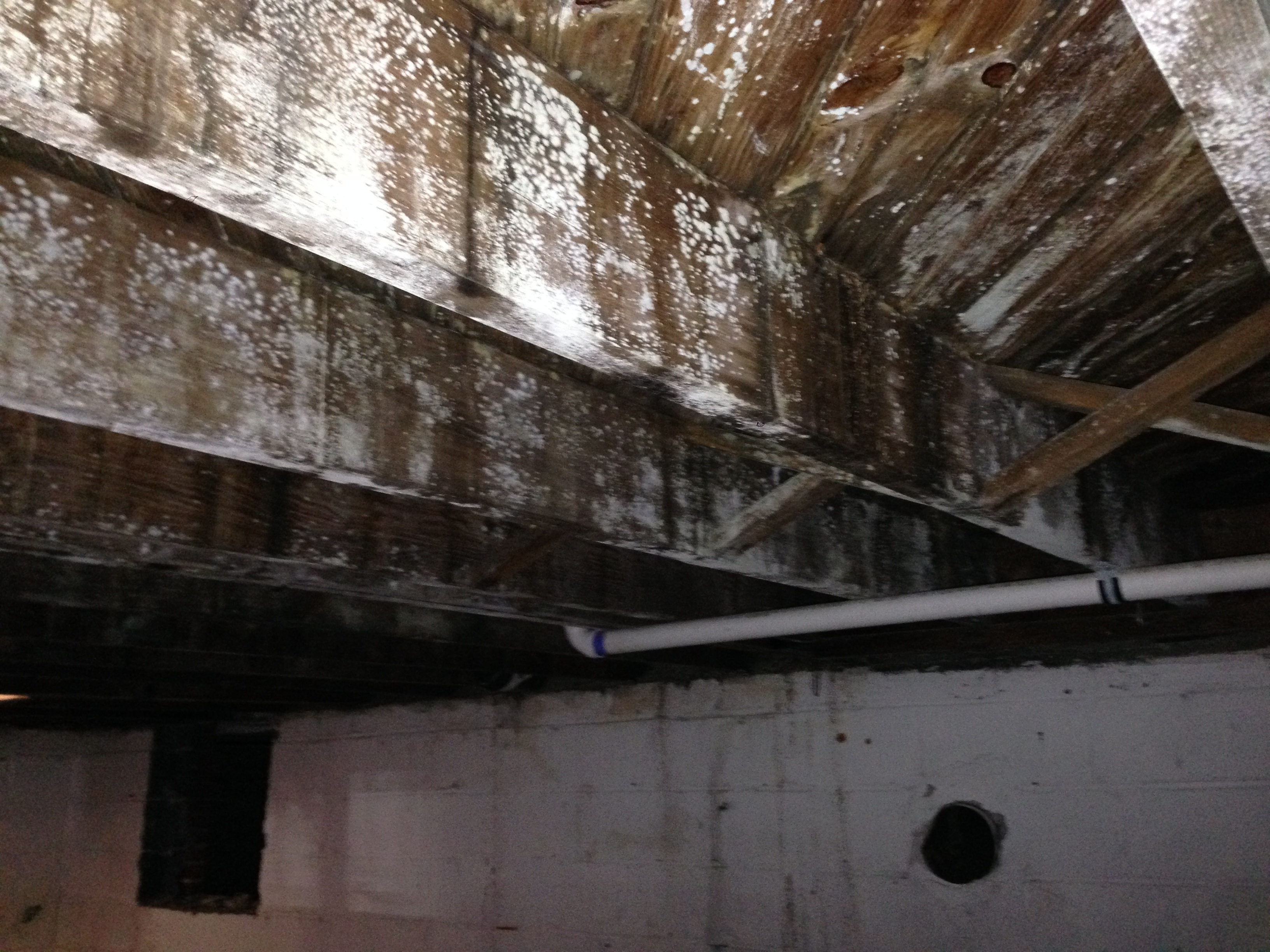 Mold on rafters white