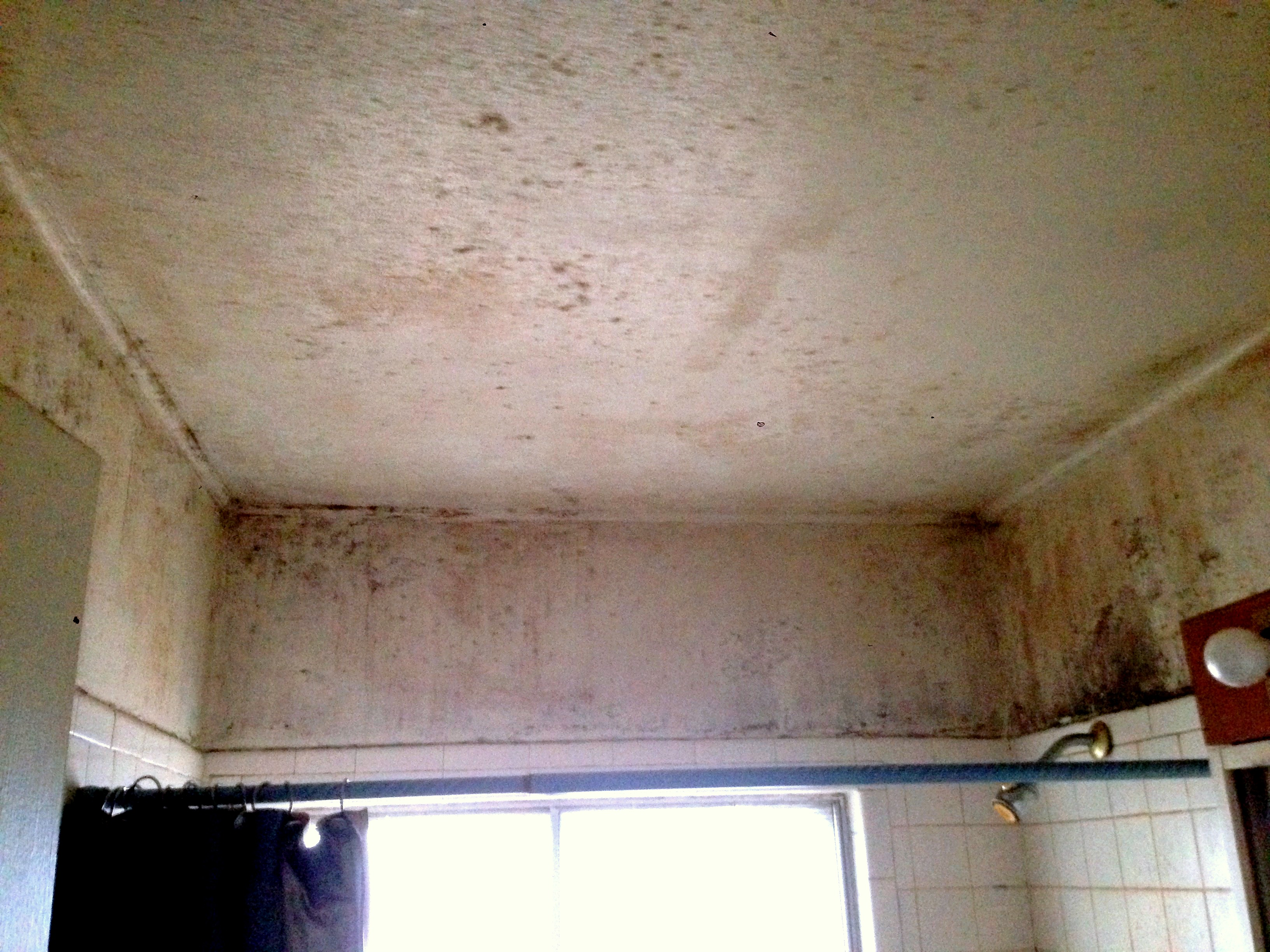 Mold_on_ceiling_of_bathroom.jpg