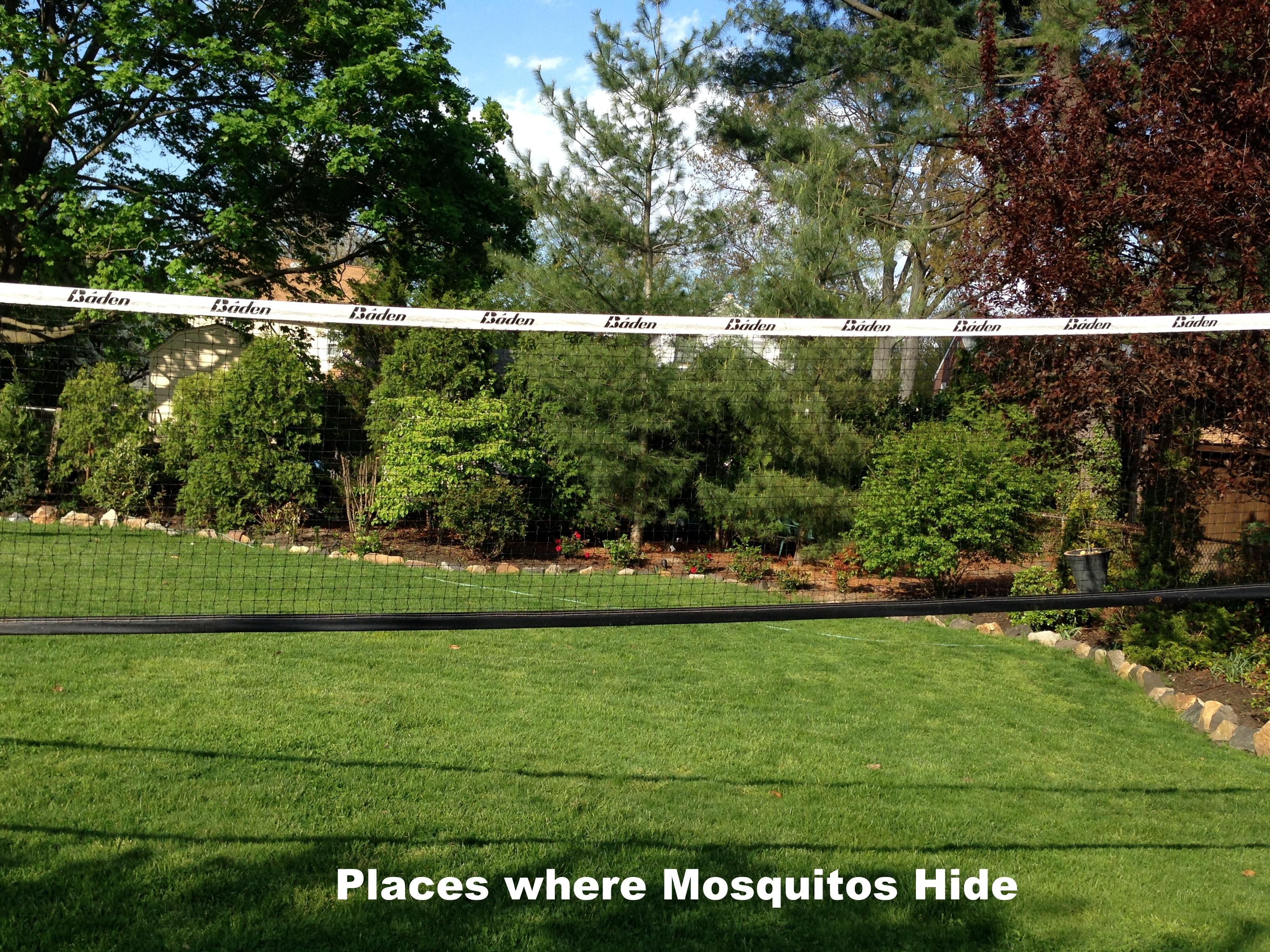 Mosquito Breeding places2-1.jpg