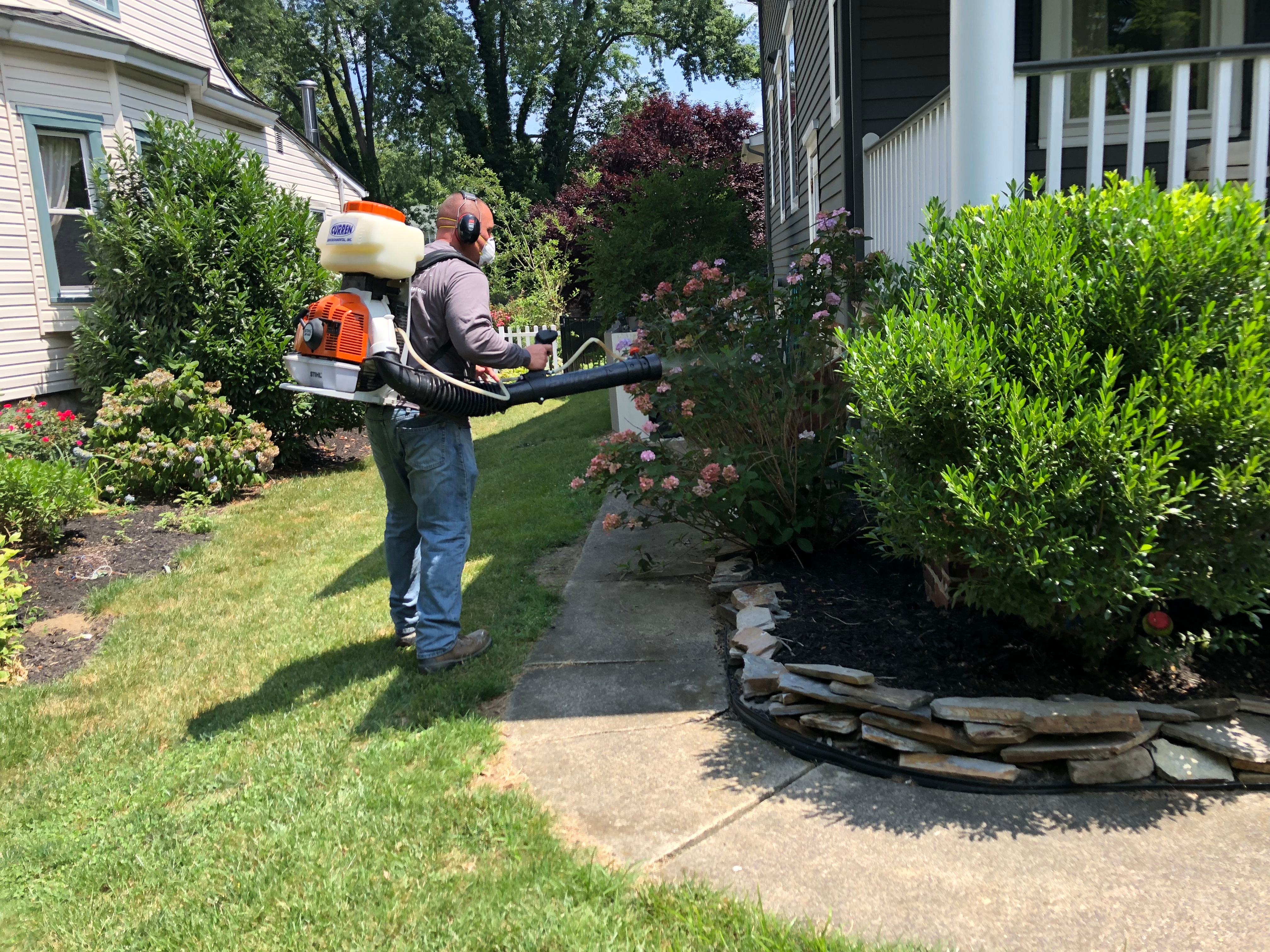 residential mosquito control service
