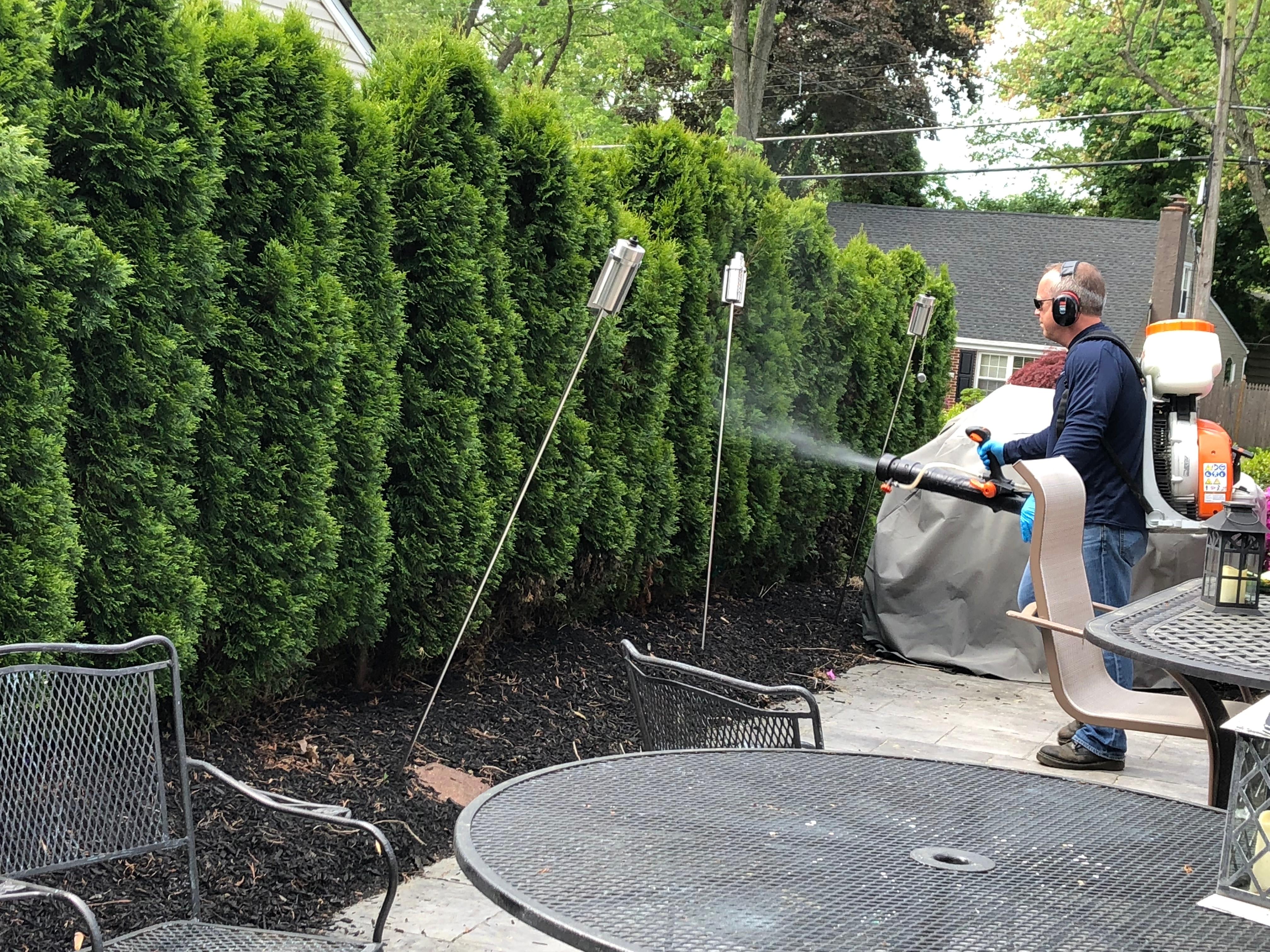 Mosquito Remediation