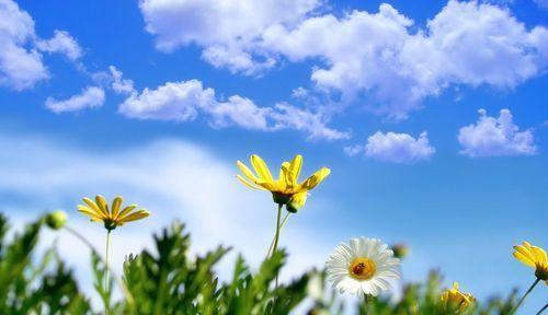 Spring_image.jpg