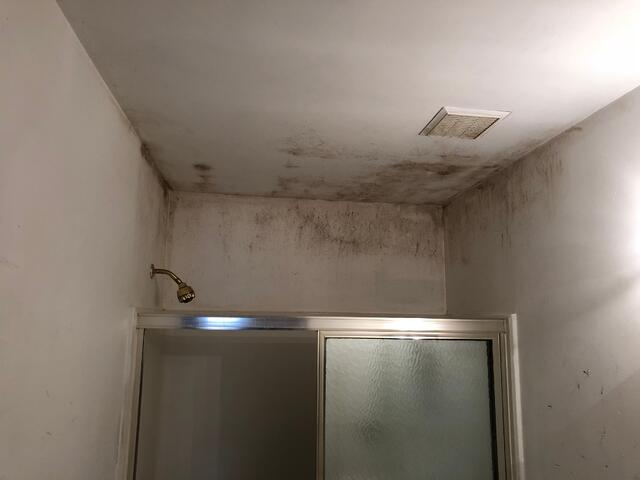 bathroom mold-1.jpg