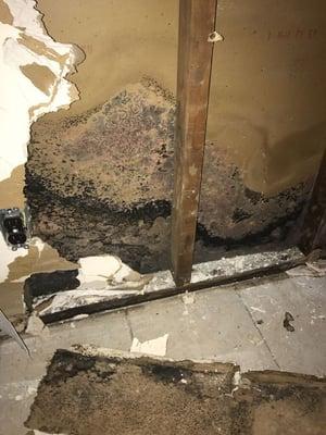 hidden mold behind walls
