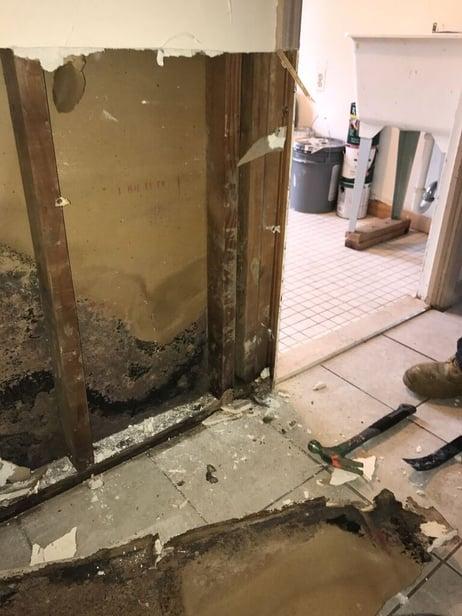 basement sheetrock mold