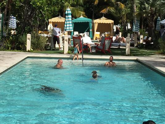 mosquito control for pools
