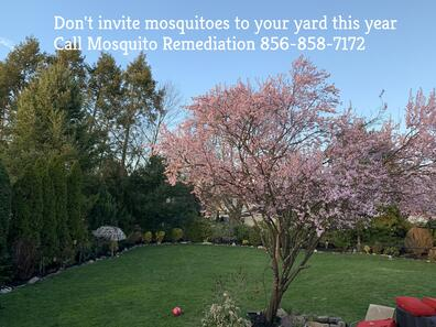 do mosquito control services work
