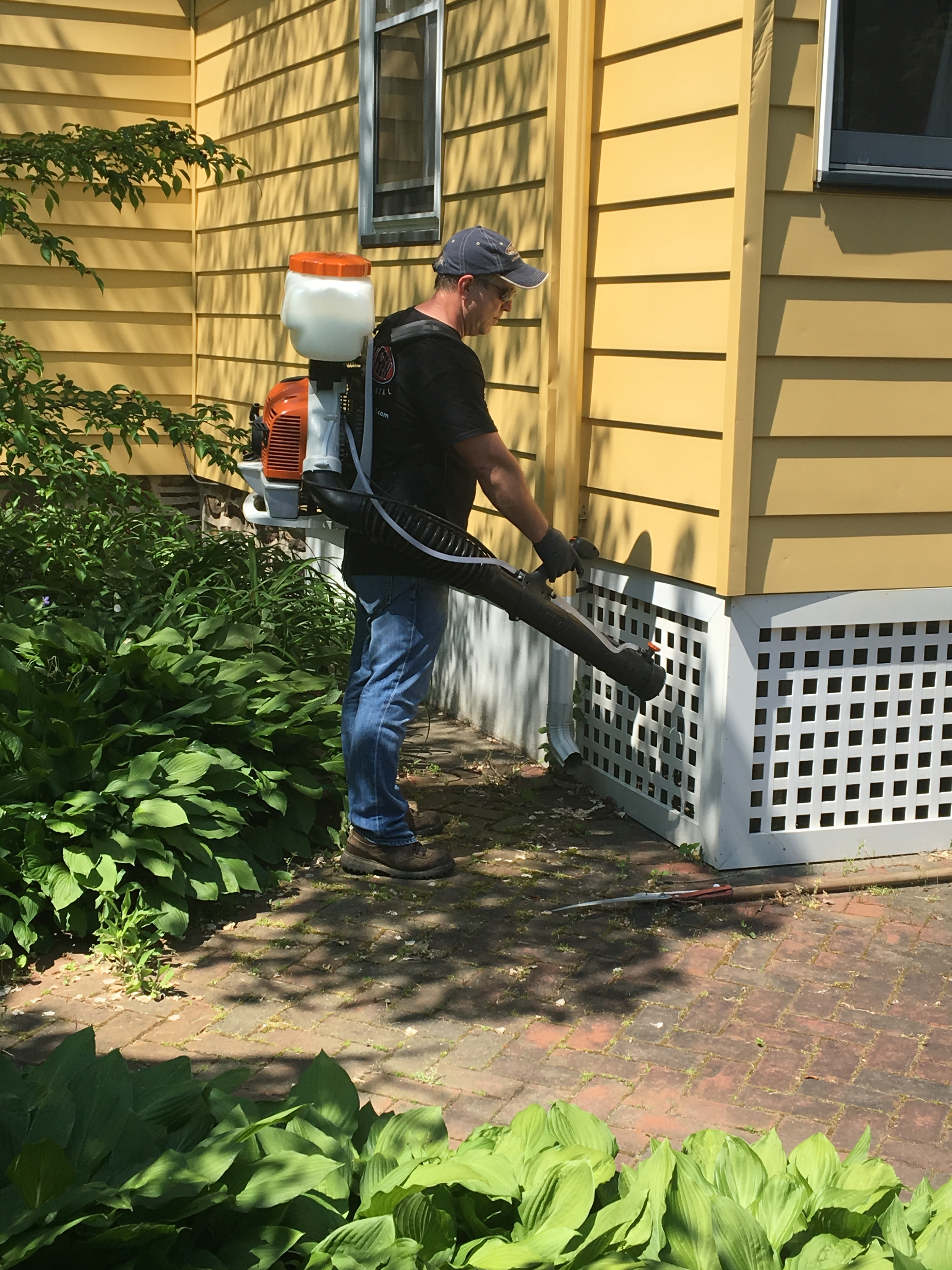 mosquitoes hide under porches in the heat of the day-1