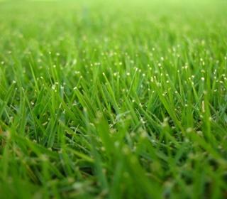 Green_lawn