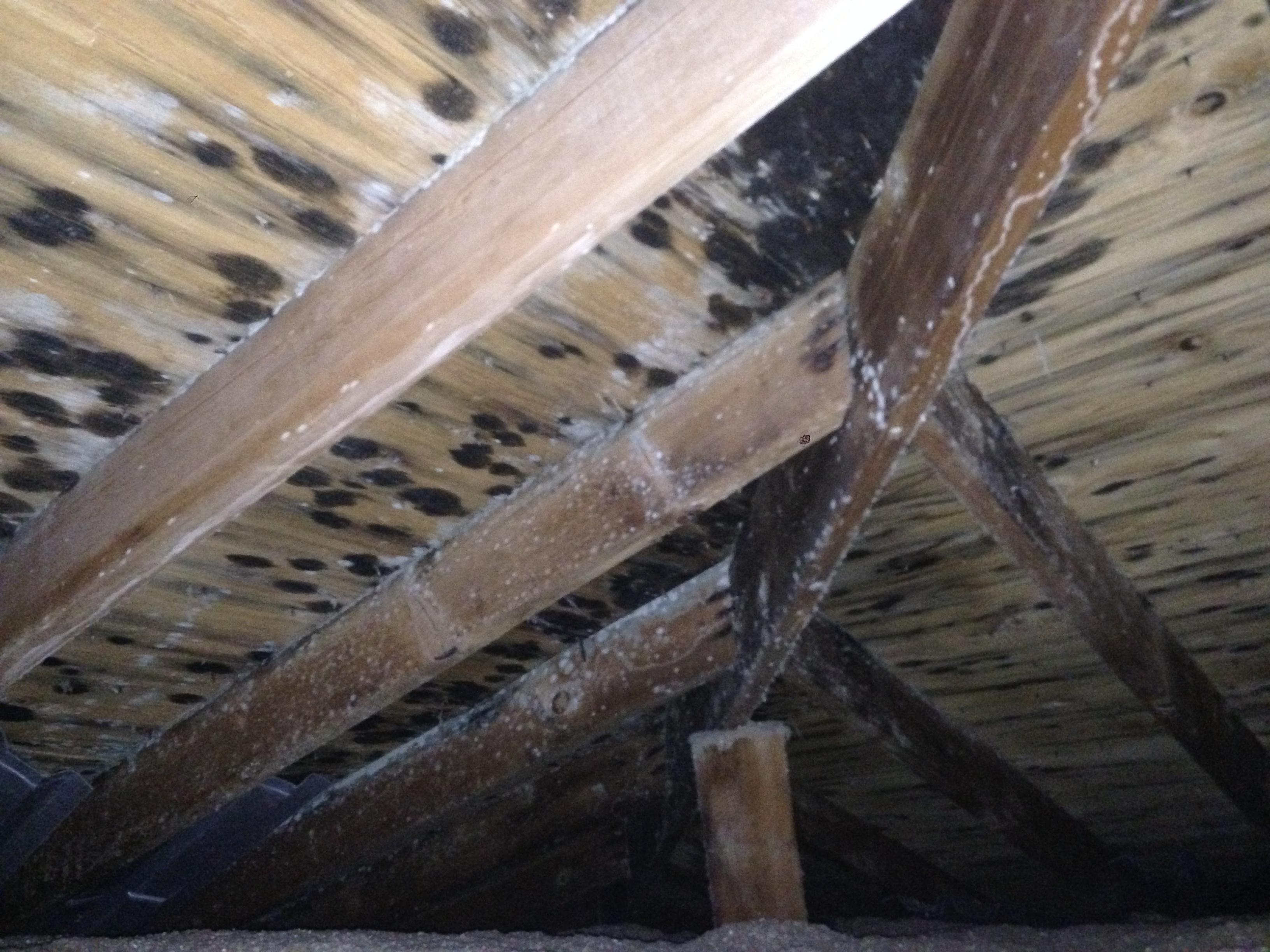 attic mold