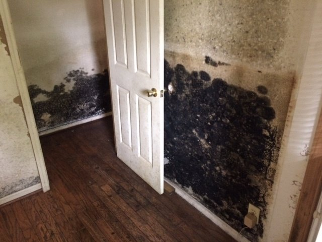 mold prevention5